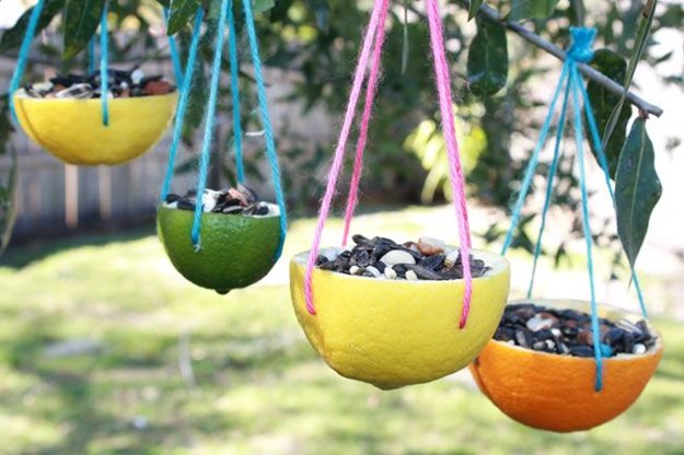 bird feeders made from citrus fruit